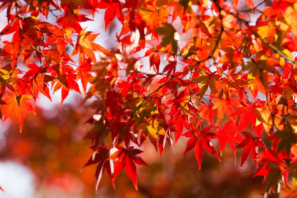 Kyoto-shi, Kyoto Prefecture, Japan, 0.006 sec (1/160), f/4.0, 85 mm, EF85mm f/1.8 USM