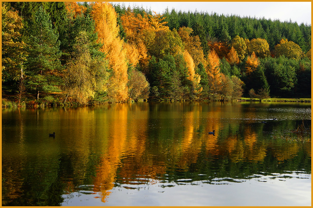 Hotels Near Forest Of Dean