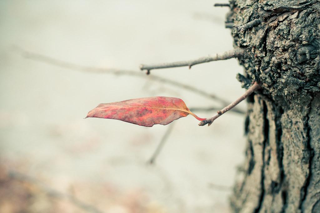 otoño {3}