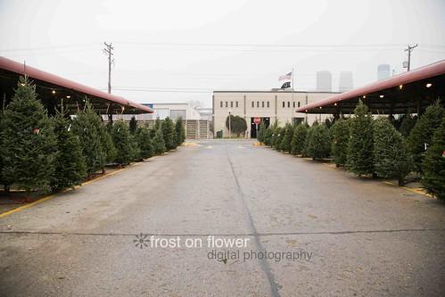 20121130-advent1-7.jpg