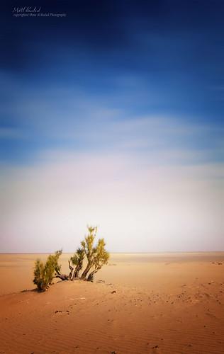 tree canon landscape sand desert saudi natrue طبيعة صحراء رمال لاندسكيب tokina1116 mzna