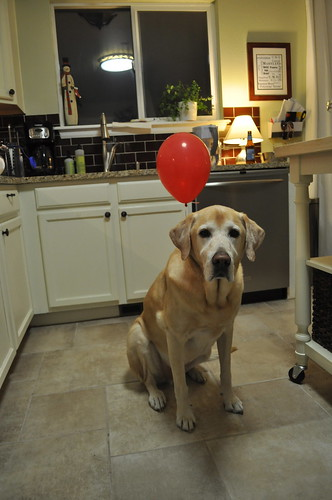 One of the three members of this family with a December birthday.  He wasn't a fan of the balloon tied to his tail.