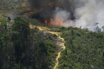 Indonesia suffers an estimated $1 billion in potential losses each year from the release of carbon stored in its tropical forests' peatlands. Improved land management could lower the peat carbon loss rate. Photo courtesy Indonesian Climate Change Center.