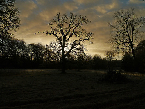 uk cold tree silhouette scotland estate scenic frosty dumfries galloway dumfriesshire springkell