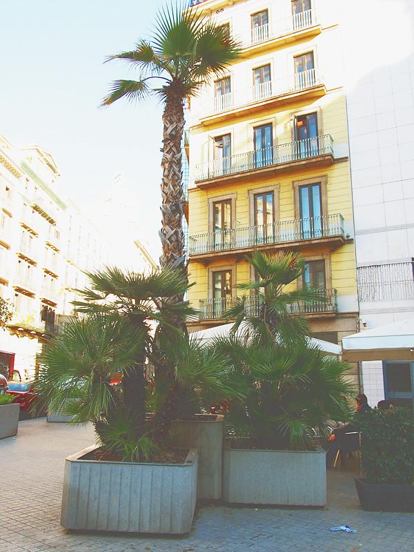 barcelona palmuja