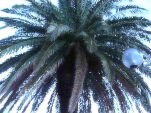 l'arbre qui chante - photo