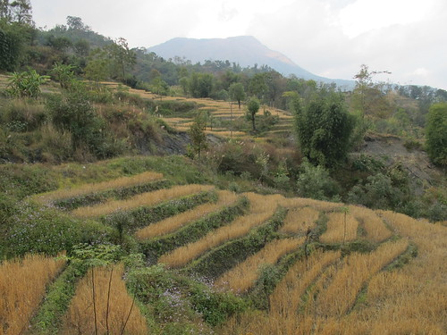 Terraced fields around Khuzama village
