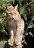 Lynx 3.jpg