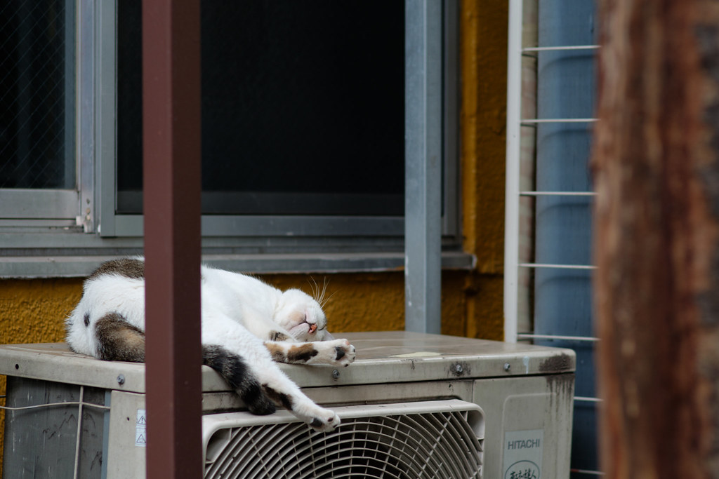 cat on the air conditioner