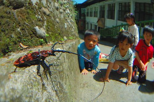 孩子們正在戶外觀察自然