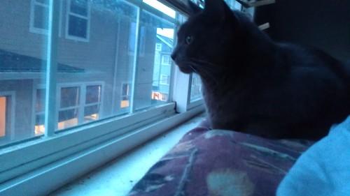 Neighborhood watch by christopher575