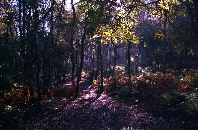 Bulkeley Hill Wood