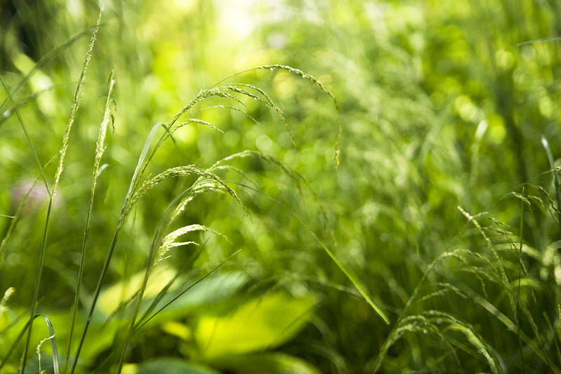 Curving Grass