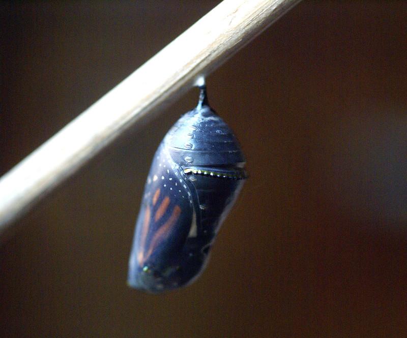 ButterflyToday