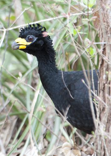 Pantanal greeting committee