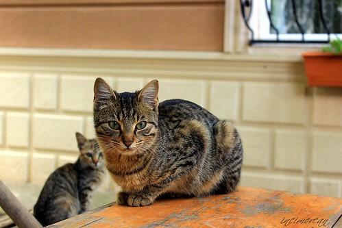 Katzen / les chats