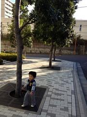 朝散歩 - ドングリの木 (2012/11/8)