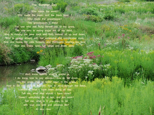 the summer day mary oliver In honor of the summer solstice, some poetic inspiration from mary oliver, who asks, tell me, what is it you plan to do/with your one wild and precious life this poem, which many refer to.