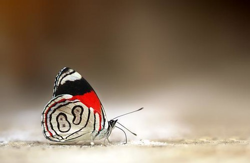 number-8-butterfly