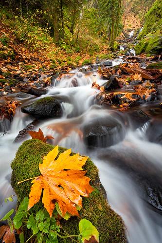 longexposure autumn leaves oregon columbiagorge starvationcreek