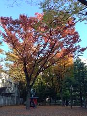 恵比寿公園の紅葉