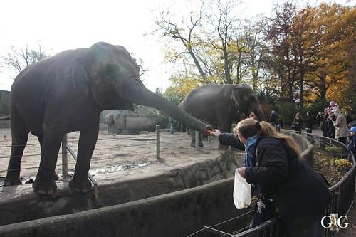 020 füttern kann man die Elefanten