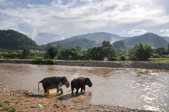 sanctuary for elephants