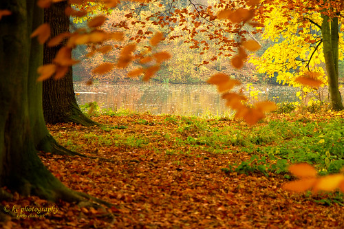 love autumn always