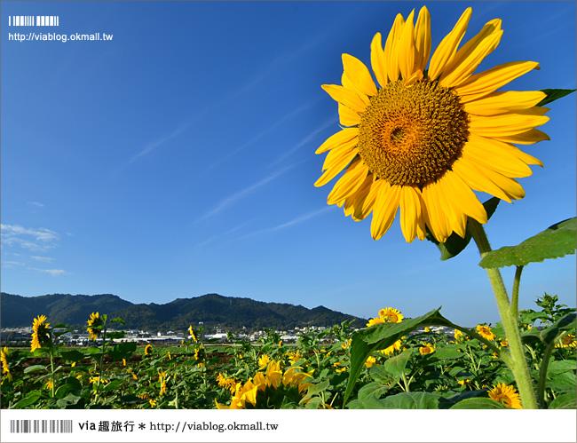 【新社花海2012】2012新社花海節活動介紹及交通資訊8-19