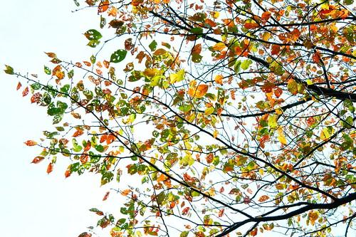 [フリー画像素材] 自然風景, 樹木, 葉っぱ, 紅葉・黄葉 ID:201211221200