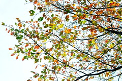 [Free Images] Nature, Trees, Leaves, Autumn Leaf Color ID:201211221200