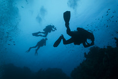 Gabr el bint dive site Dahab Egypt