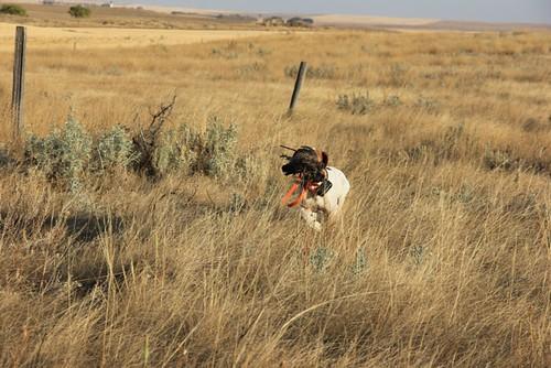 Hunting is a cruel essay