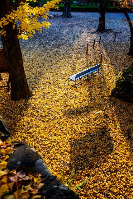 Photo:斜陽とベンチ Spotlit Bench By Yuya Sekiguchi