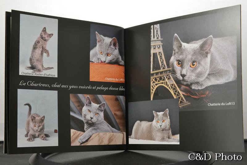 Chats Chartreux du livre sur les Chats de race de cnd photo