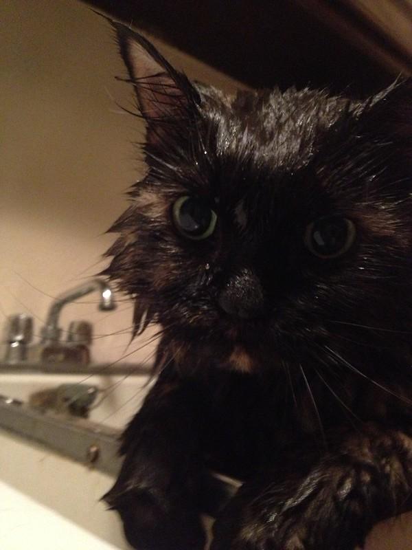 293 wet cat