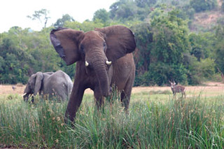 Elephants romp near the camera of Chart correspondant  Travis Curtice