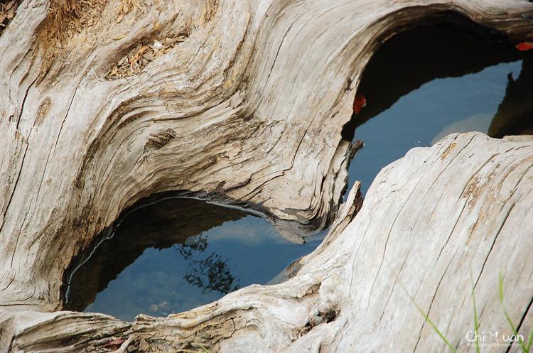 羅東林業文化園區-貯木池06.jpg