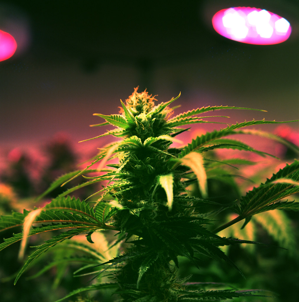 the controversial issue of marijuana legalization in the united states The arkansas general assembly made several changes to issue 6—the medical marijuana legalization  ballot measures the united states  controversial.