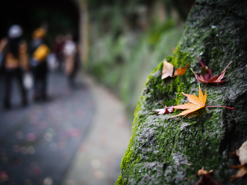 Fallen Leaves on the Rock ( Oyamazaki Kyoto ) by hyossie