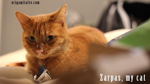 zarpasMycat2