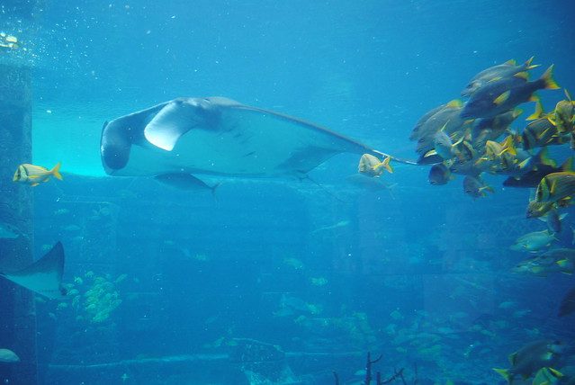 Bahamas Nassau Atlantis Hotel Aquarium Flickr