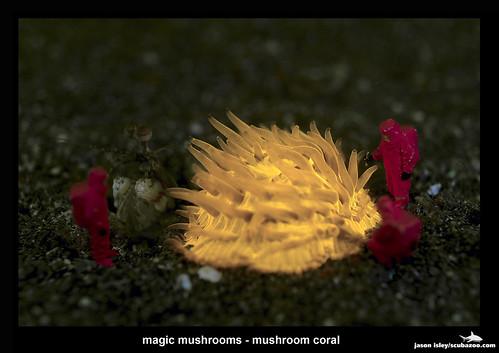 workers - magic mushroom