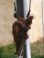 Zoo de Perth
