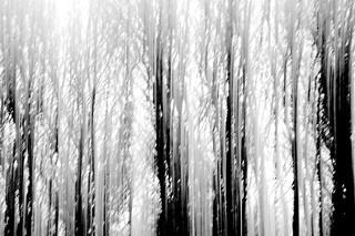Tree Panning