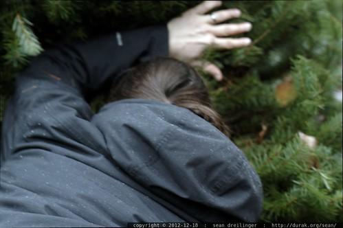 sequoia's photo of sean cutting down an xmas tree    MG 0501