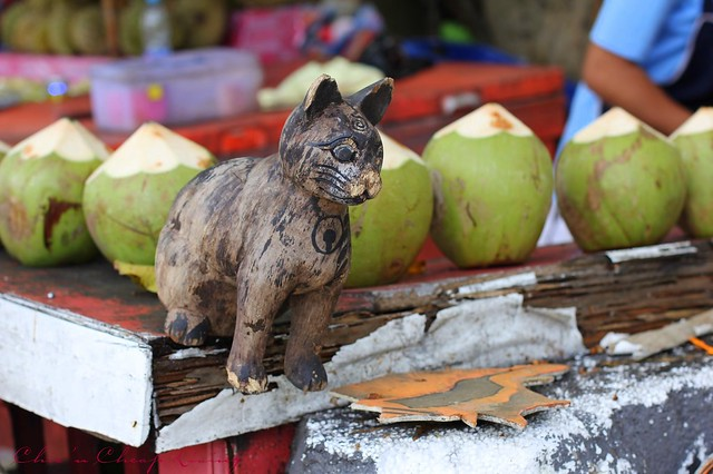 Coral Island cat and coconuts by Chic n Cheap Living