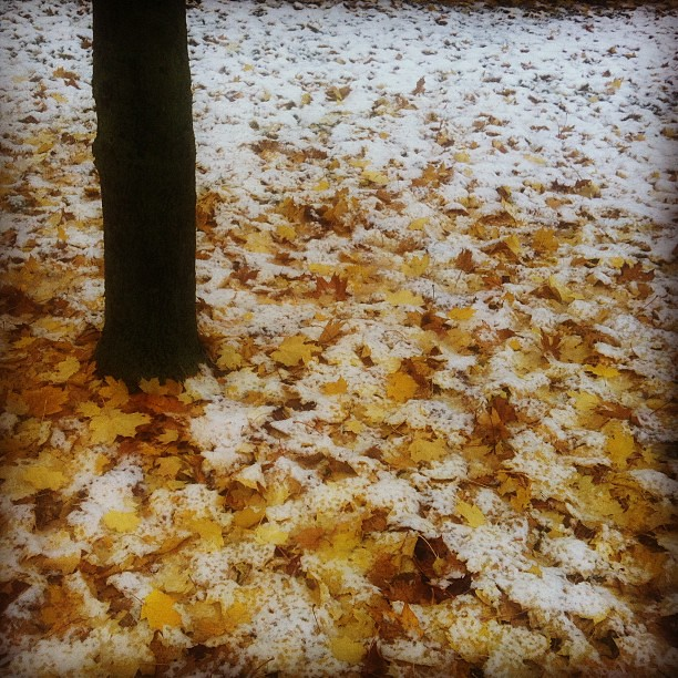Icy leaves #autumn