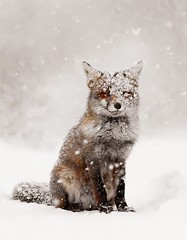 arctic fox(0.0), gray wolf(0.0), animal(1.0), winter(1.0), snow(1.0), mammal(1.0), fox(1.0), coyote(1.0),