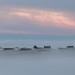 Misty Day by alecmath